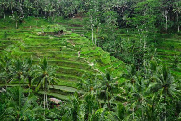tegalalang-rice-terrace-ubud-bali-1-featured