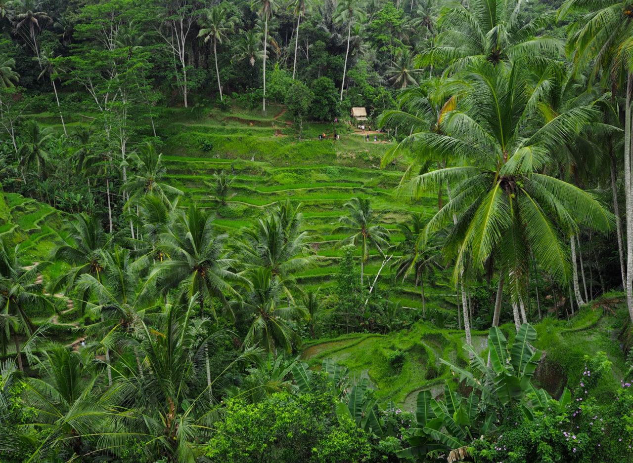 tegalalang-rice-terrace-ubud-bali-2