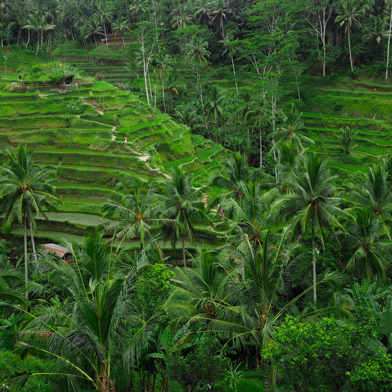 Tegalalang rice terrace bali guide gownsandroses for Tegalalang rice terrace ubud