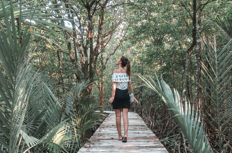 Koh Chang mangrove forest video